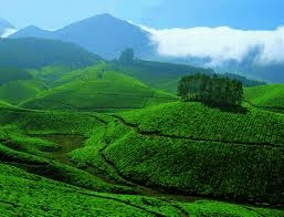 Tour Package - Kerala, The Southern Delight