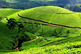 Tour Package - Kerala Honeymoon Tour