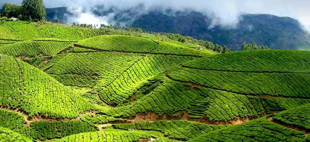 Tour Package - MISTY MUNNAR & ENCHANTING BACKWATERS