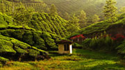 Munnar Weather And Best Time To Visit