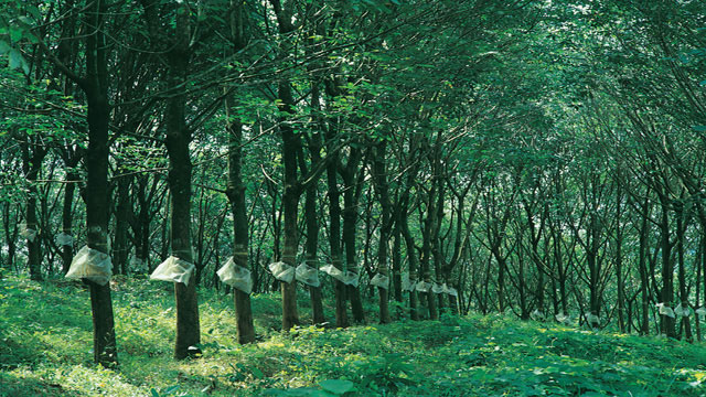 #6. Explore the Sandalwood Forests at Marayoor
