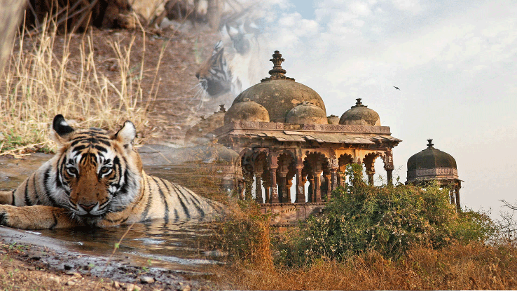 RANTHAMBORE PACKAGE WITH SAFARI