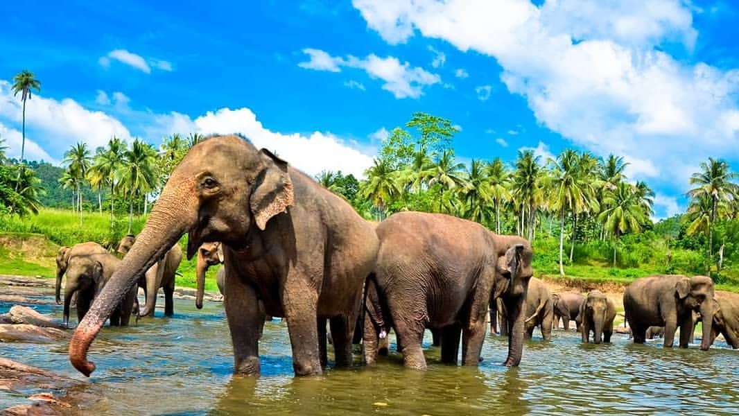 Sri Lanka 03 Days Tour