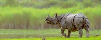 2 Nights Kaziranga 1 nights Guwahati