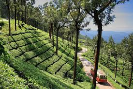 Holidays in Coorg