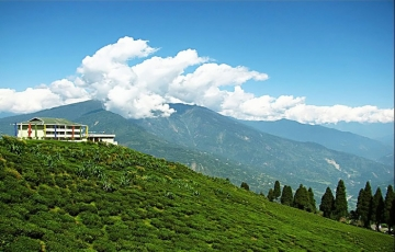 NORTH EASTERN DELIGHT WITH PELLING