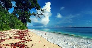 Paradise On Coral Reef